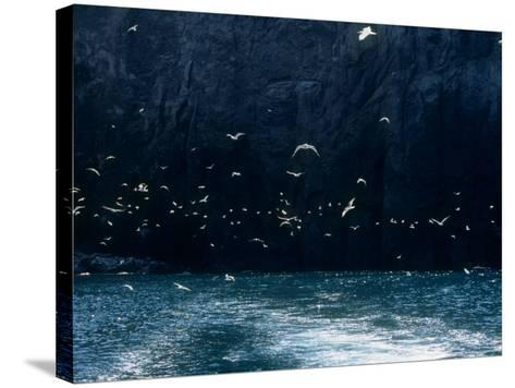 Seabirds--Stretched Canvas Print