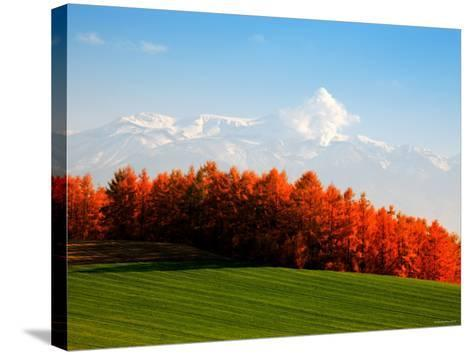 Autumn Landscape--Stretched Canvas Print
