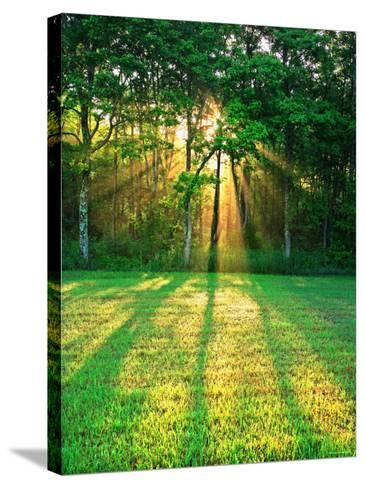 Sunbeams Through the Trees--Stretched Canvas Print