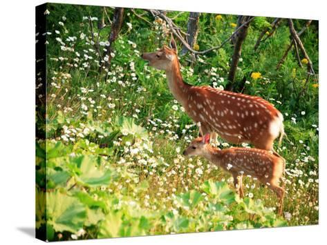 Deer--Stretched Canvas Print