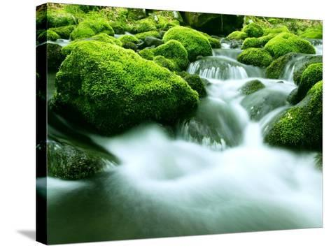 Mountain Stream--Stretched Canvas Print