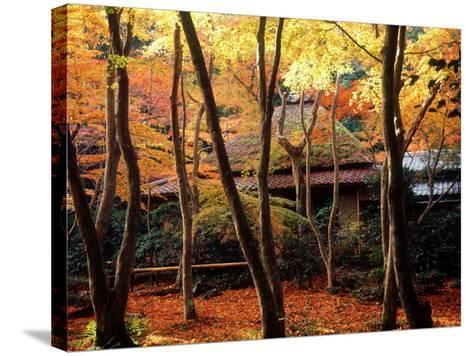 Maple Trees at Giou-Ji Temple in Autumn, Kyoto, Japan--Stretched Canvas Print