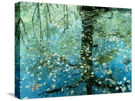 Leaves on the Water--Stretched Canvas Print