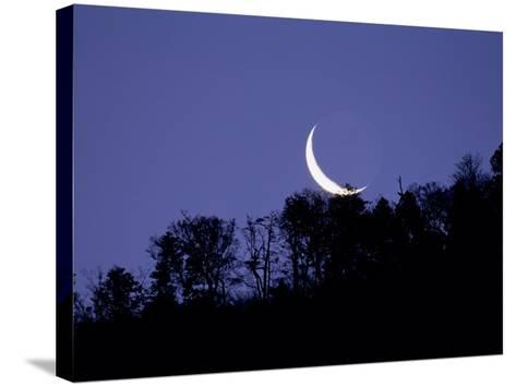 Moon Over the Forest--Stretched Canvas Print