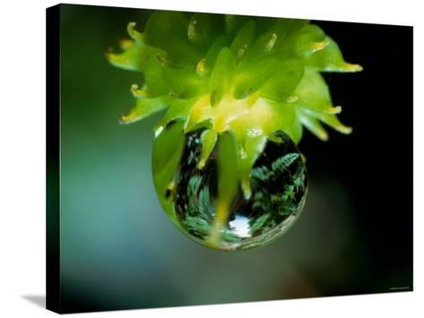 Waterdrops--Stretched Canvas Print