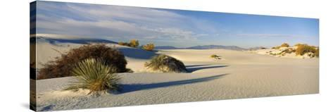 Desert Plants in White Sands National Monument, New Mexico, USA--Stretched Canvas Print