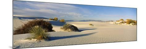 Desert Plants in White Sands National Monument, New Mexico, USA--Mounted Photographic Print