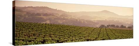 Mountains in Front of Vineyards, Asti, California, USA--Stretched Canvas Print