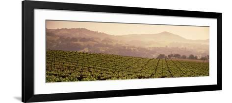 Mountains in Front of Vineyards, Asti, California, USA--Framed Art Print