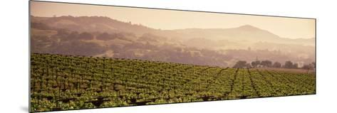 Mountains in Front of Vineyards, Asti, California, USA--Mounted Photographic Print