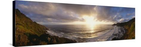 Seal Calves at the Coast, Oregon, USA--Stretched Canvas Print