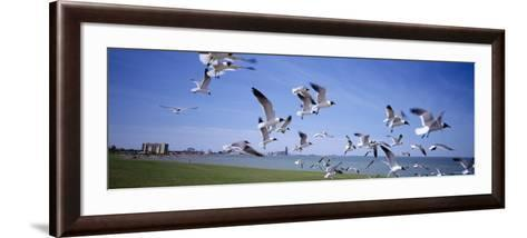 Flock of Seagulls Flying on the Beach, New York, USA--Framed Art Print