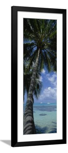Sailboats in the Sea, Moorea, French Polynesia--Framed Art Print