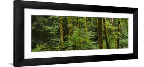 Trees in a Forest, Olympic National Park, Washington, USA--Framed Art Print