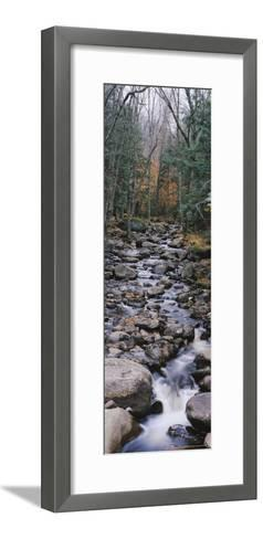 Water Flowing in the Forest, Adirondack Mountains, New York, USA--Framed Art Print