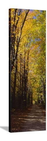 Dirt Road Passing Through a Forest, Sleeping Bear Dunes National Lakeshore, Empire, Michigan, USA--Stretched Canvas Print