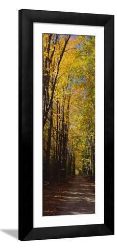 Dirt Road Passing Through a Forest, Sleeping Bear Dunes National Lakeshore, Empire, Michigan, USA--Framed Art Print