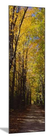 Dirt Road Passing Through a Forest, Sleeping Bear Dunes National Lakeshore, Empire, Michigan, USA--Mounted Photographic Print