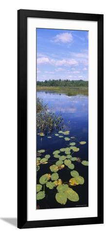Lily Pads in a Marsh, Adirondack State Park, Adirondack Mountains, New York, USA--Framed Art Print