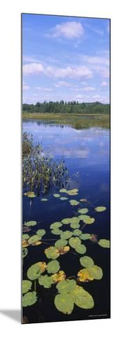 Lily Pads in a Marsh, Adirondack State Park, Adirondack Mountains, New York, USA--Mounted Photographic Print