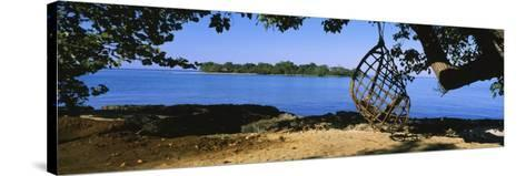 Rope Swing Hanging from a Tree on the Beach, Negril, Jamaica--Stretched Canvas Print