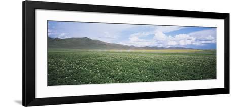 Field of Potato Crops, Idaho, USA--Framed Art Print