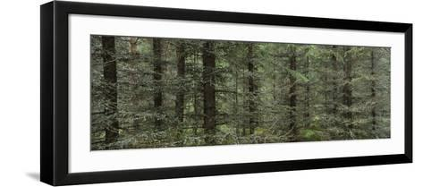 Trees in a Forest, Spruce Forest, Joutseno, Finland--Framed Art Print