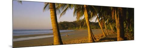 Palm Trees on the Beach, Samara Beach, Guanacaste Province, Costa Rica--Mounted Photographic Print
