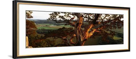 Close-Up of a Cedar Tree, Wisconsin, USA--Framed Art Print