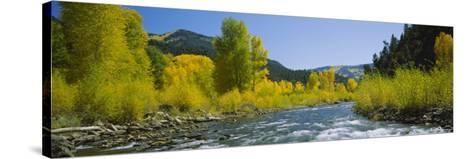 River Flowing in the Forest, San Miguel River, Colorado, USA--Stretched Canvas Print