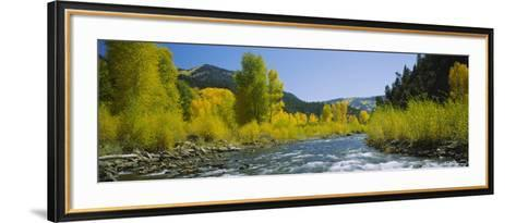 River Flowing in the Forest, San Miguel River, Colorado, USA--Framed Art Print