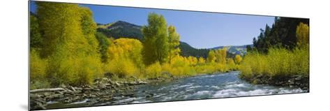River Flowing in the Forest, San Miguel River, Colorado, USA--Mounted Photographic Print