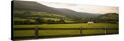 Horse in a Field, Enniskerry, County Wicklow, Republic of Ireland--Stretched Canvas Print
