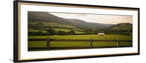 Horse in a Field, Enniskerry, County Wicklow, Republic of Ireland--Framed Art Print