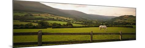 Horse in a Field, Enniskerry, County Wicklow, Republic of Ireland--Mounted Photographic Print