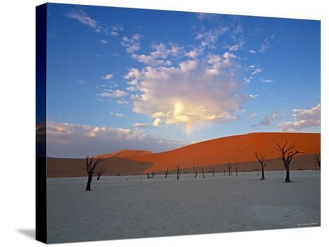 Red dunes and dead acacia tree, Dead Vlei, Namib-Naukluft-Sossusvlei, Namibia-Gavin Hellier-Stretched Canvas Print