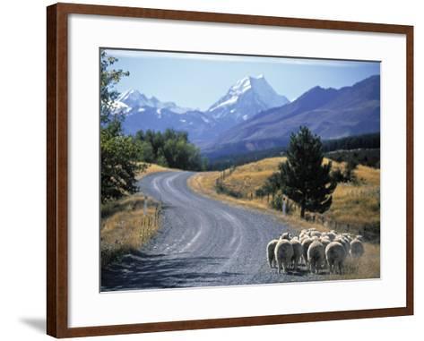 Sheep Nr. Mt. Cook, New Zealand-Peter Adams-Framed Art Print