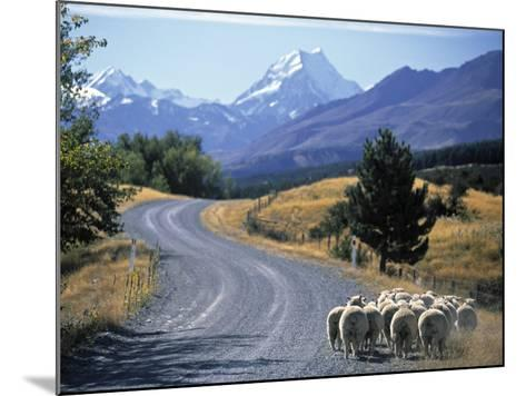 Sheep Nr. Mt. Cook, New Zealand-Peter Adams-Mounted Photographic Print