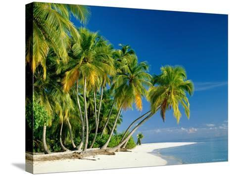 Palm Trees and Tropical Beach, Maldive Islands, Indian Ocean-Steve Vidler-Stretched Canvas Print