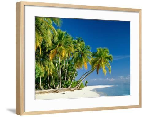 Palm Trees and Tropical Beach, Maldive Islands, Indian Ocean-Steve Vidler-Framed Art Print