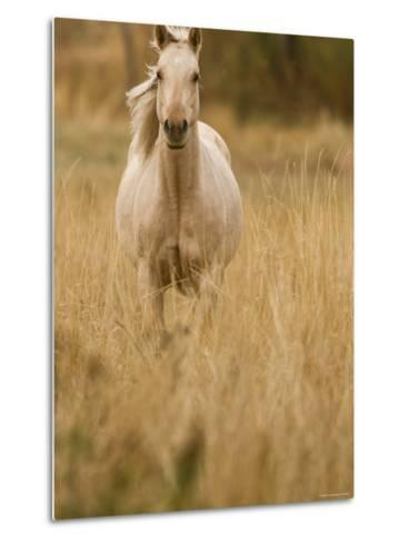 Horse, Montana, USA-Russell Young-Metal Print
