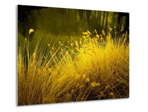 Golden Plants along River with Reflections of Trees-Jan Lakey-Metal Print