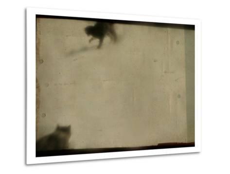 Blurred Cats-Mia Friedrich-Metal Print