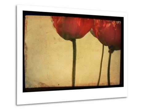 Study of Red Poppies-Mia Friedrich-Metal Print