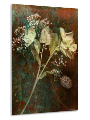 Wilted White Rose and Baby's Breath-Robert Cattan-Metal Print
