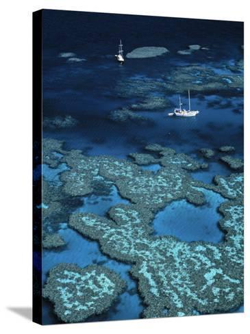 Great Barrier Reef, Queensland, Australia-Danielle Gali-Stretched Canvas Print