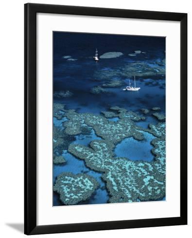 Great Barrier Reef, Queensland, Australia-Danielle Gali-Framed Art Print