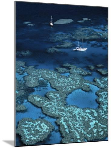 Great Barrier Reef, Queensland, Australia-Danielle Gali-Mounted Photographic Print