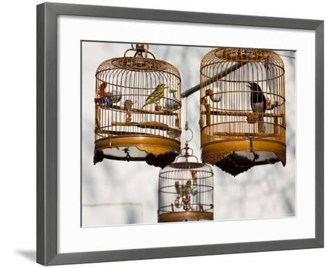 Yuen Po St Bird Market, Monkok, Kowloon, Hong Kong, China-Jane Sweeney-Framed Art Print