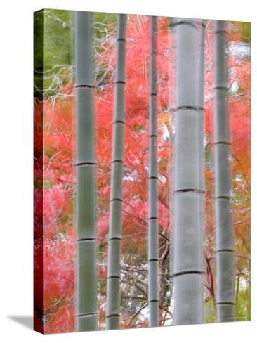Maples Trees and Bamboo, Arashiyama, Kyoto, Japan-Gavin Hellier-Stretched Canvas Print